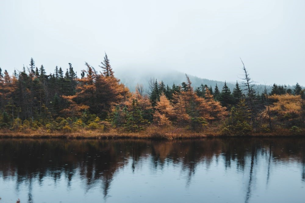 Jesus' Solitude and Silence
